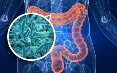 Curiosidades del intestino